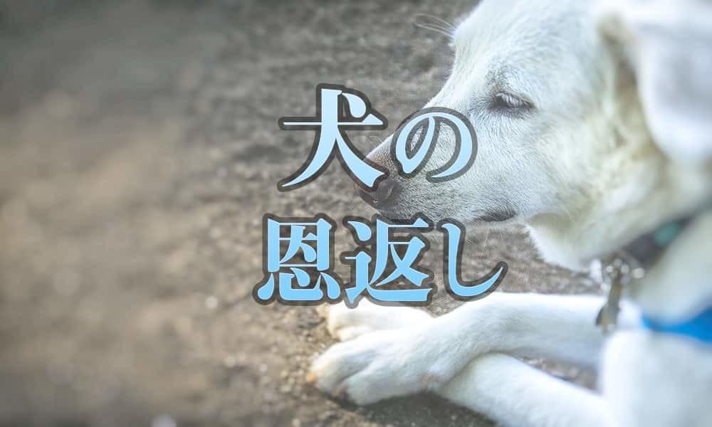 犬の恩返し